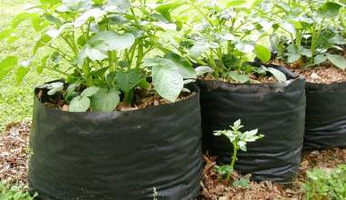 10 Best Potato Grow Bags And Easy Harvest Planters